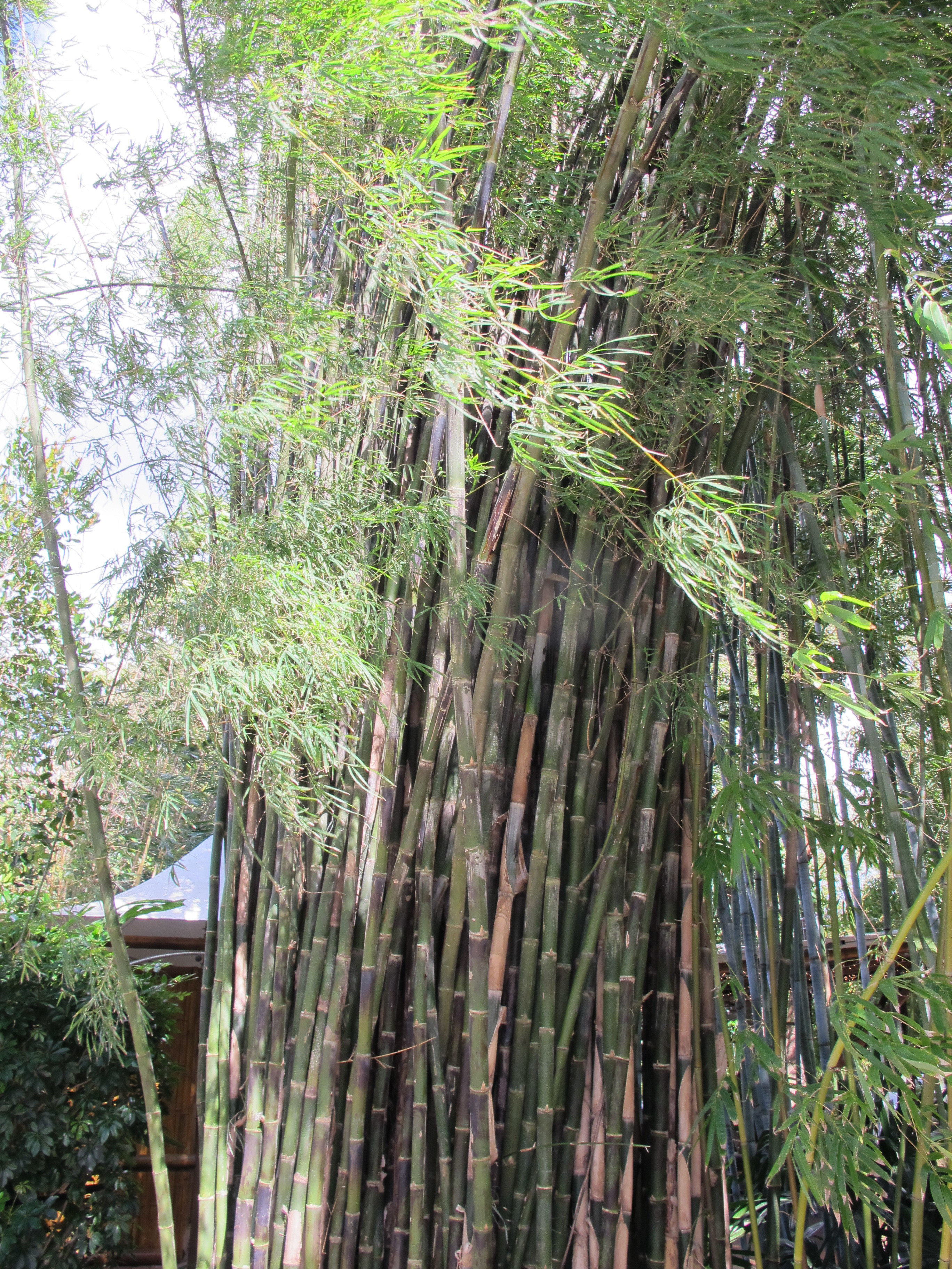 Bamboo Class with Andy Firk – Plants & Healers International