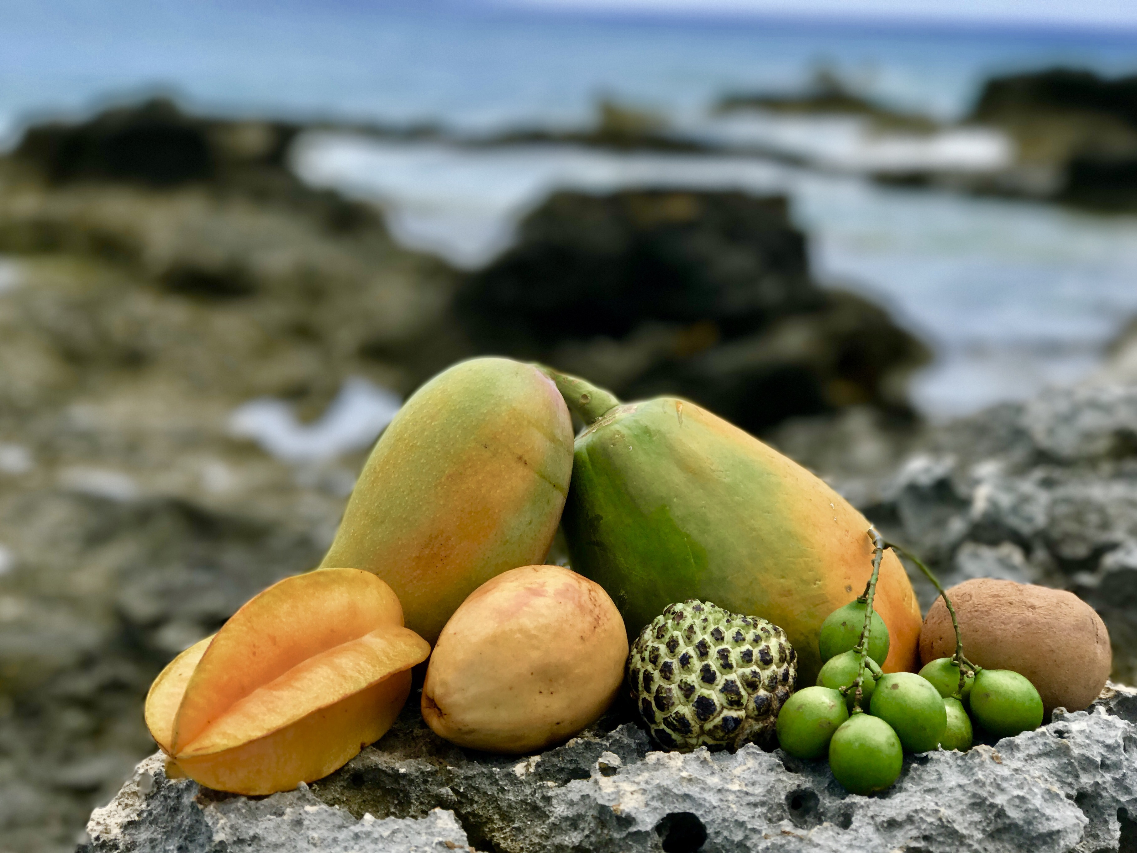 Tropical Fruits Of The Caribbean Plants Healers International